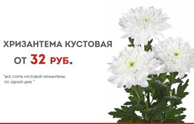 хризантма